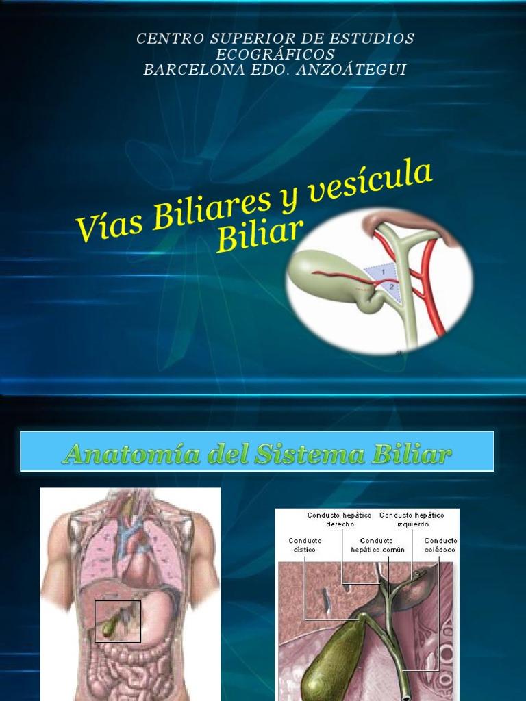 Anatomia Biliar