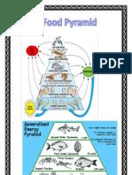 Ocean, Land, Life Pyramid