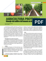 agriculturaprotegidamanejodecultivodetomateeninvernadero