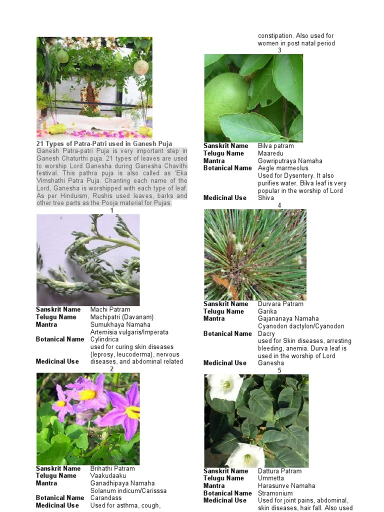 Medicinal Plants And Their Uses With Pictures And Scientific