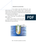 Mikrobilogija rizosfere