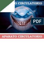 Aparato Circulatorio_14 (2)