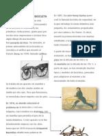 HISTORIA BICICLETA.docx