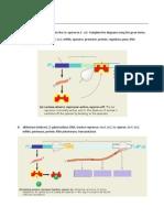 BIO3 - Handout on lac operon