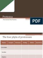 BIO1 - Protozoa