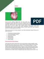 Anatomi dan fisiologi jantung pada manusia