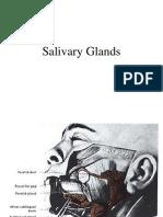 salivary gland