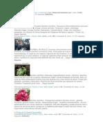 Reportaje de Plantas