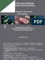 Estructura Bacteriana Elementos Facultativos (2).pptx