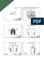 Anatomia.respiratoriaI