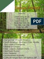 Deciduous Forest 2P4