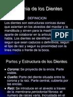 2anatomiadelosdientes-111107104548-phpapp01