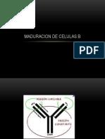 MADURACION DE CELULAS B.pptx