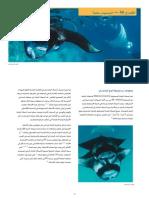 CITES FactSheet Manta Rays Arabic