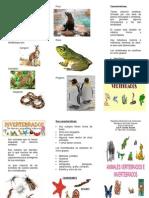 Triptico Vertebrados e Invertebrados