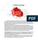 Anatomy Myocardial Infarction