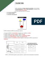 2 Ac Nucleicos Dna+Rna