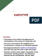 karyotyping visible