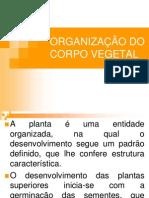 AULA 2 -ORGANIZAÇÃO DO CORPO VEGETAL