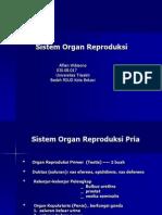 sistem organ reproduksi