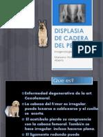 Displasia de Cadera Del Perro