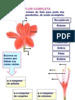 Ficha Flor