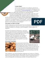 Wie wächst Kakao