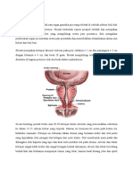 anatomi fisiologi prostat