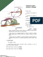 Analizatorul Auditiv Anatomie Si Fiziologie 10.10.2012