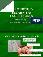 Procariotes y Eucariotes Unicelulares