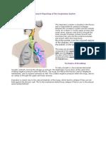 anatomy of resp system