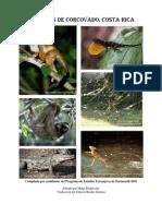 Animales de Corcovado Costa Rica
