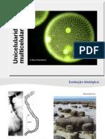 bioegeo-unicelularidade_multicelularidade