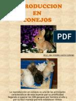 Reproduccion Conejos[1]