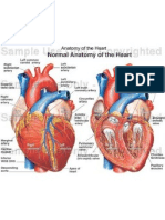 electrocardiograma-121003104619-phpapp01