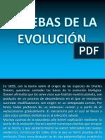 prueba paleontologica.pptx