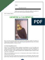 GENÉTICA CALOPSITAS.pdf