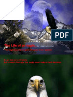 The Life of an Eagle
