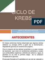 ciclodekrebs-101014184426-phpapp01