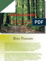 Pădurile din România