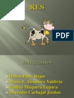 Diapositivas de Res - Tecnicas