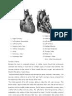 Anaphysiology