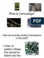 camoflouge