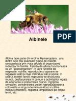 Albine
