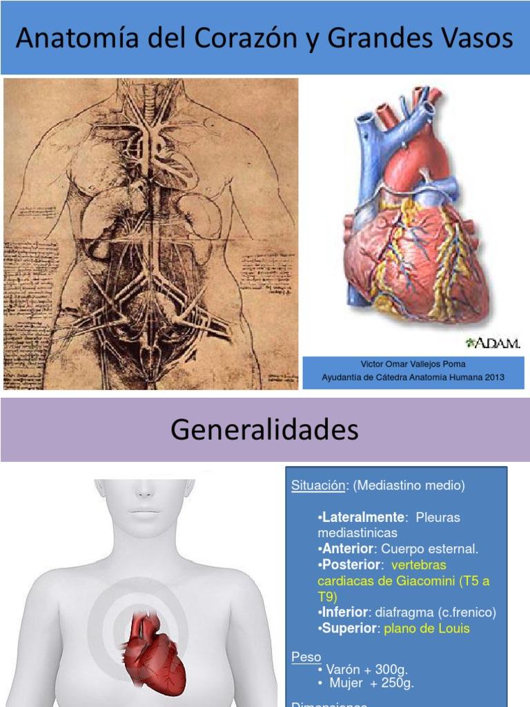 1-1-anatomia-del-corazon-y-grandes-vasos.pdf