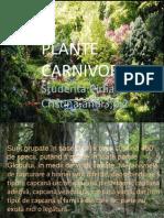 Plante Carnivore