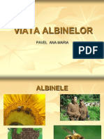 Viataa albinelor 2