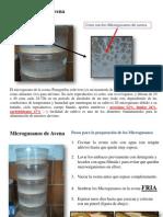 Artemia Microgusanos