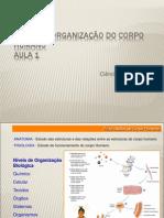 Níveis de Organização do Corpo Humano (Aula 1)