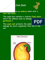 Synthetic seed
